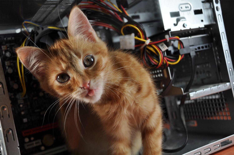 El gato en la computadora